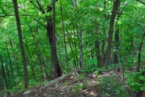 Miškų supirkėjai palengvina miško pardavimą